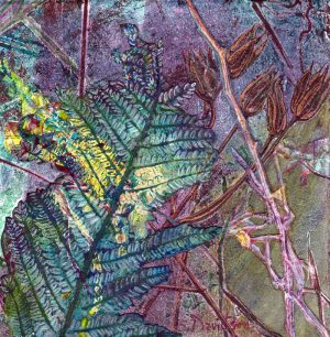nature inspired monoprint transformation 48 plants and ferns sharmon davidson